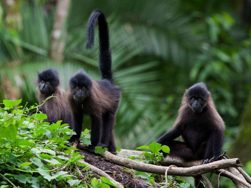 Image result for Kibale National Park